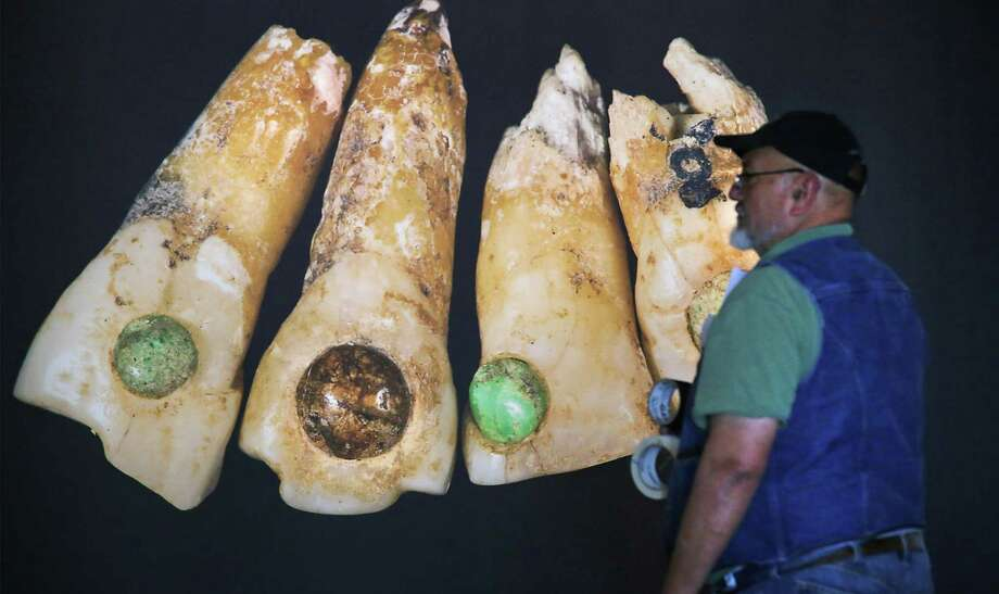 "The Witte Museum is about ready to open the exhibit ""Maya:Hidden Worlds Revealed"" in the Mays Family Center. Museum workers were putting final touches on the exhibit on Monday, May 9, 2016. Wally Castro of the museums exhibits department, gets a close look at a blown up photograph of human teeth with inlaid gem stones which were symbols of elite status in the community. Photo: Bob Owen, San Antonio Express-News / San Antonio Express-News"