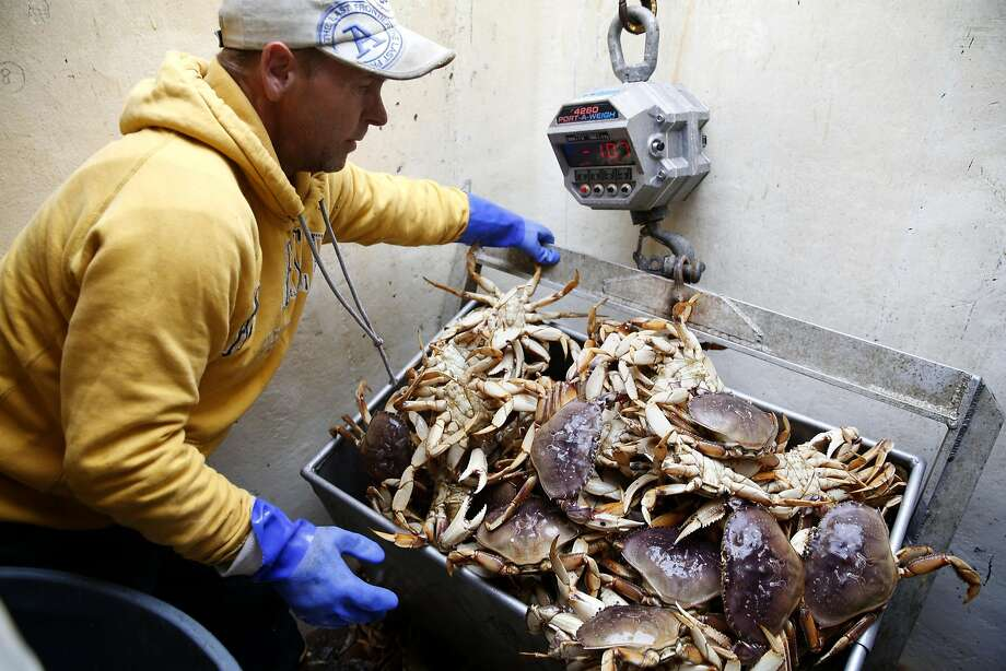 Kevin Knutinen unloads Dungeness crab into a metal crate at Pier 45. Many fisherman who would now be after salmon continue to put out crab pots, since the Dungenes season didn't begin until late March — months late. Photo: Connor Radnovich, The Chronicle