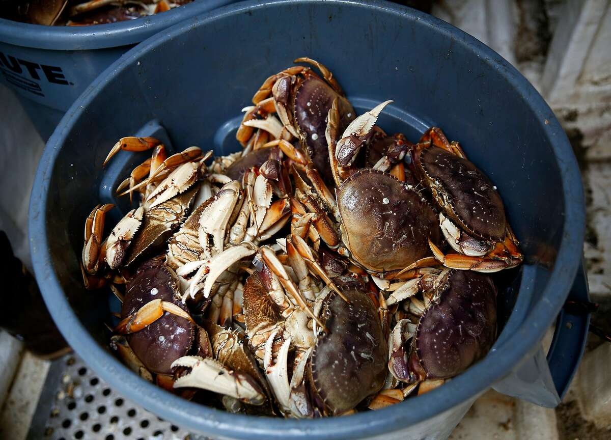 A garbage can full of Dungeness crab in a boat at Pier 45 in San Francisco, California, on Monday, May 9, 2016.