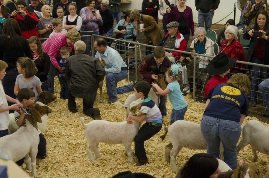(File Photo) Youngsters get a chance to go in the ring with a goat Saturday before the Midland County Livestock Show. Photo by Tim Fischer/Midland Reporter-Telegram Photo: Tim Fischer