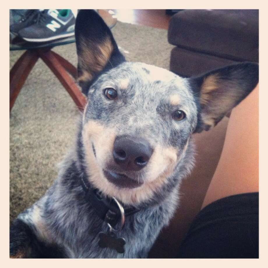 Bryan Johnston, a 27-year-old Army veteran, is looking for his service pet, a 1 1/2-year-old blue heeler named Bruce who escaped from his home at the intersection of Golf Course and Todd roads. Anyone who may have information the lost dog should call Teresa Tuttle at 638-7984.