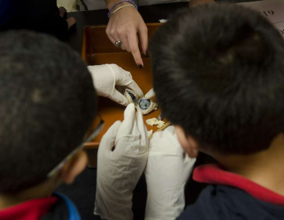 Students examine the inisde of a sheep eye Thursday. Local elementary schools visited  Lee High School as part of Lee Lab Days to introduce young students to science.  Photo: Tim Fischer/Reporter-Telegram