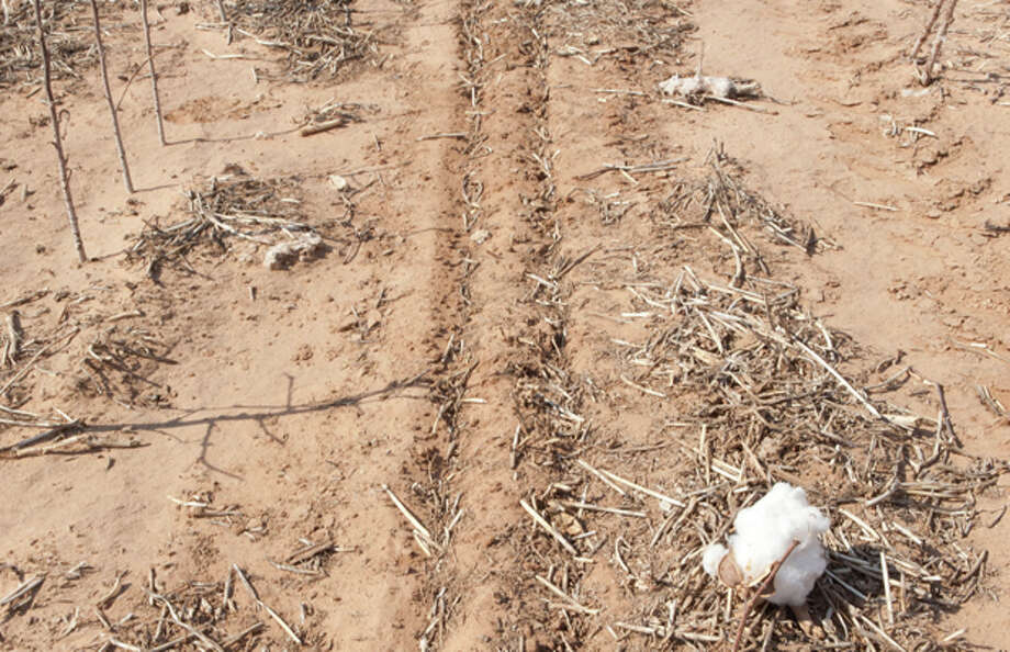 Seeds have yet to germinate in the non-irrigated sections of Roy Graham's cotton producing land in Greenwood. The stalks that remain from last season's harvest are for preventing soil erosion. Cindeka Nealy/Reporter-Telegram Photo: Cindeka Nealy / Cindeka Nealy/Reporter-Telegram