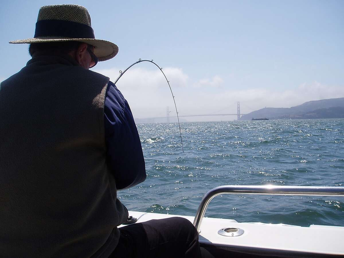 Benny Tschirky battles a halibut just offshore Angel Island -- striped bass and halibut have entered San Francisco Bay for the summer season