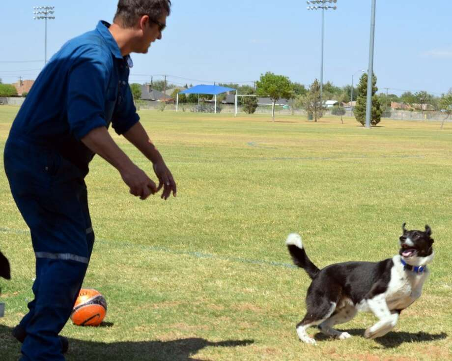 Eric White throws a ball for Max at Beal Park recently. Max was reunited with his family after being a lost dog for a year and a half. Photo: James Cannon/Reporter-Telegram