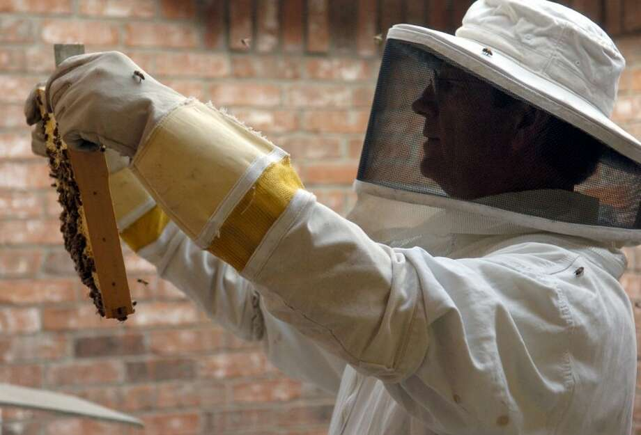 Bee keeper Tim Cleverdon, with Bee Busters, examines one of his hives for honey. Cleverdon said this is an easy process with European bees, but Africanized bees would swarm and attack him and not stay in the hive. Photo by Tim Fischer 5/16/08 Photo: MRT File Photo