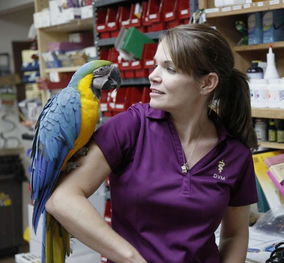 Dr. Jessica Todia of A to Z Veterinary Clinic in Midland talks with Charlie, a Macaw, Tuesday. Charlie is part of the Peeps and Creeps program the clinic has established as a sanctuary for exotic animals. Chaney Mitchell/Reporter Telegram Photo: Chaney Mitchell