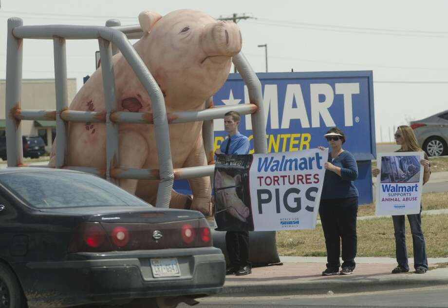 Nick Wallerstedt, next to inflatable pig, is joined in a protest outside the southside WalMart by Sybil Eberhart and Makael Nichols Tuesday to protest pork suppliers to WalMart. Photo by Tim Fischer\ Reporter-Telegram Photo: Tim Fischer