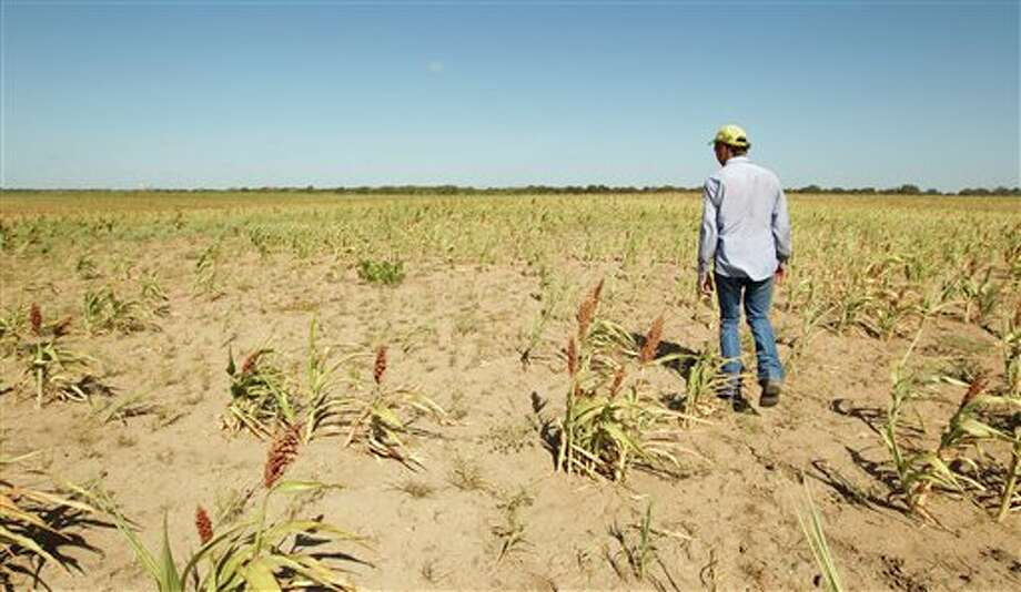 (FILE PHOTO) In a July 27, 2011 photo, David Tucker, a part-time contract farm laborer at Rocking H Farm in Garfield, looks at a failed milo crop. Tucker planted 240 acres of milo, 220 acres of corn and 150 acres of cotton. All of the crops were a complete loss except for 140 acres of drought-damaged milo that produced about 10 percent of normal. The drought has spread over much of the southern U.S., leaving Oklahoma the driest it has been since the 1930s and setting records from Louisiana to New Mexico. But the situation is especially severe in Texas, which trails only California in agricultural productivity. (AP Photo/Austin American Statesman, Jay Jenner) AP MEMBER, ONLINE AND NEWSPAPERS ONLY MANDATORY CREDIT: NO MAGS, NO SALES, NO TV Photo: Jay Janner / Austin American-Statesman