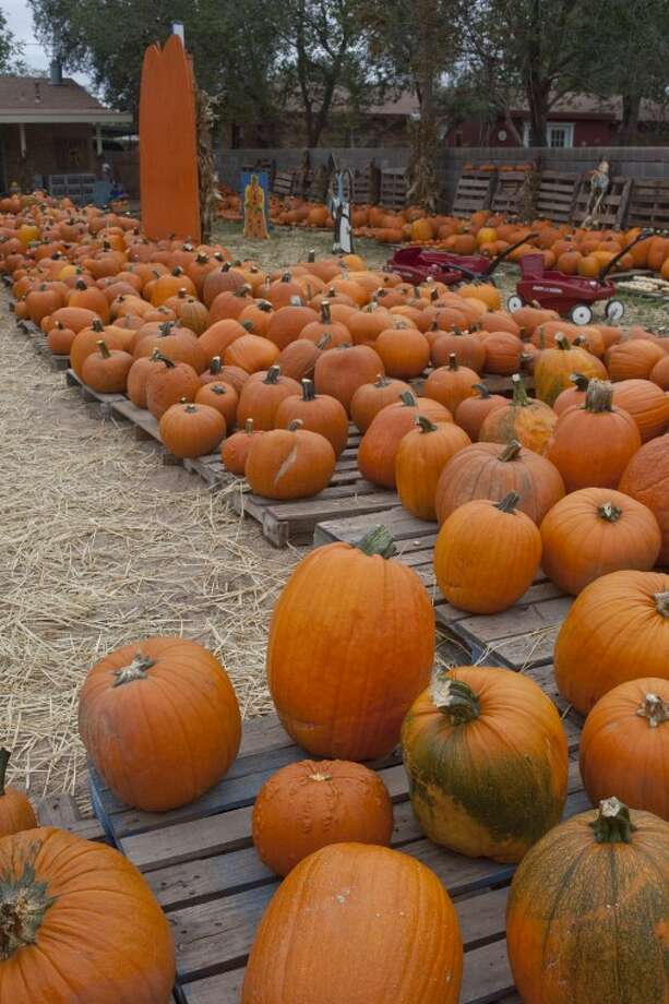 After a slight delay in the pumpkins arriving, St. Luke's United Methodist Church Pumpkin Patch is ready to open, full of thousands of pumpkins of all sizes. Tim Fischer\Reporter-Telegram Photo: Tim Fischer