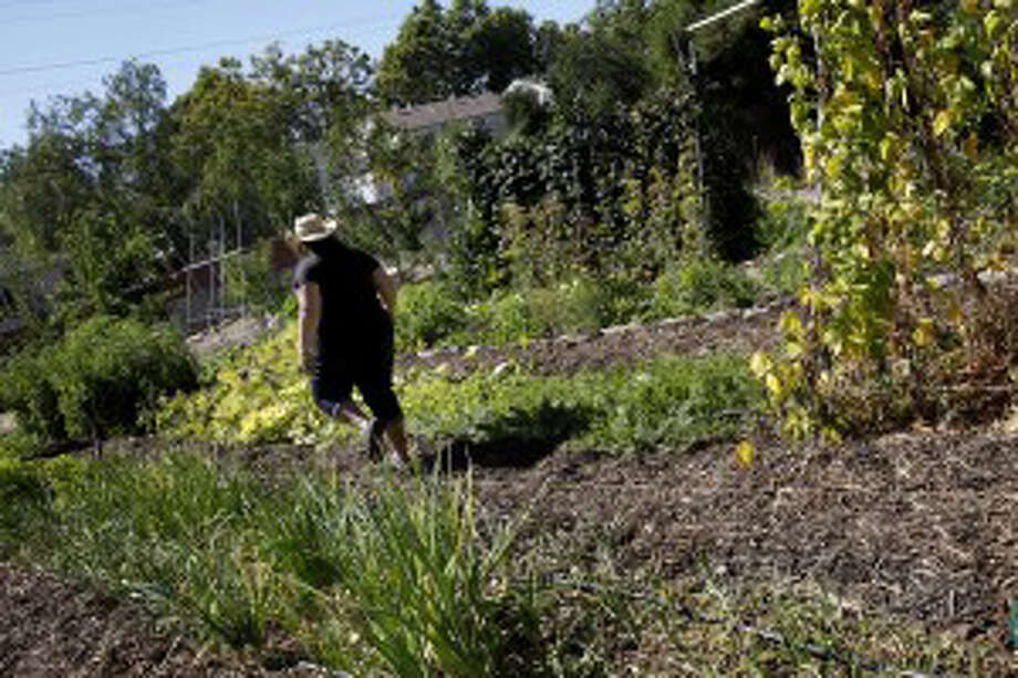 Most people only find vegetables, not cash, in their backyard gardens. Photo: Brand Ward/ San Francisco Chronicle