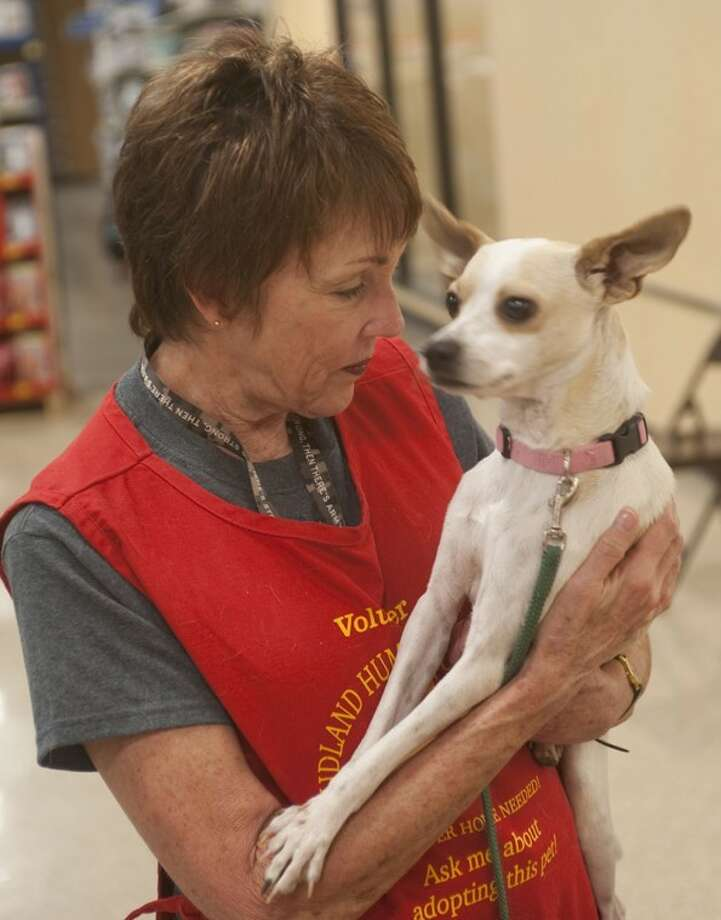 Betty Shaffer, volunteer at PetSmart Adoption Center, talks with Kevin, a Chihuahua mix, as he goes for his idea of a walk, being carried, Oct. 15, at PetSmart Adoption Center. Tim Fischer\Reporter-Telegram Photo: Tim Fischer