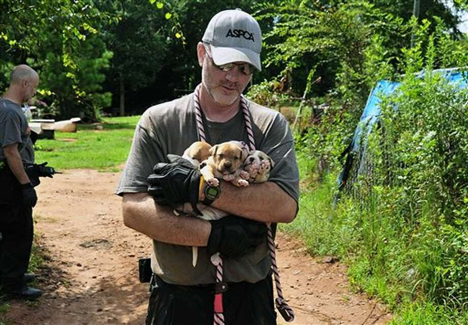 In this Aug. 23, 2013, photo provided by the ASPCA, puppies are carried by an official at a home in Auburn, Ala. A federal and state investigation into dog fighting and gambling has resulted in the arrest of 12 people from Alabama, Georgia, Mississippi and Texas. U.S. Attorney George Beck said Monday, Aug. 26, that at least 12 are charged with conducting an illegal gambling business and multiple dog fighting charges, including promoting dog fights. (AP Photo/ASPCA) Photo: Uncredited / ASPCA