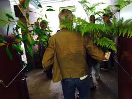 Customer with arms wrapped around plants, at Botanical Society Sale