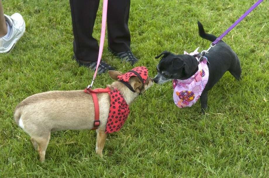 Two dogs greet each other Saturday at Pet Pallooza. Photo by Tim Fischer/Midland Reporter-Telegram Photo: Tim Fischer