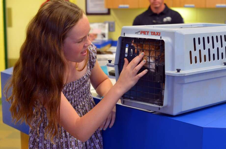Kathleen O'Grady, 11, is reunited with Frankie, her cat that has been missing for more than two years. Frankie was turned over to the SPCA shelter and the family was notified after a microchip positively identified the missing animal. Photo: James Cannon/MRT