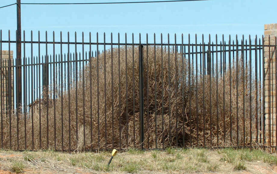Windy Days -- Tumbleweeds pile up on a fence along Bluebird Ln Monday afternoon. Photo by Reid Merritt 3/5/07 Photo: Midland