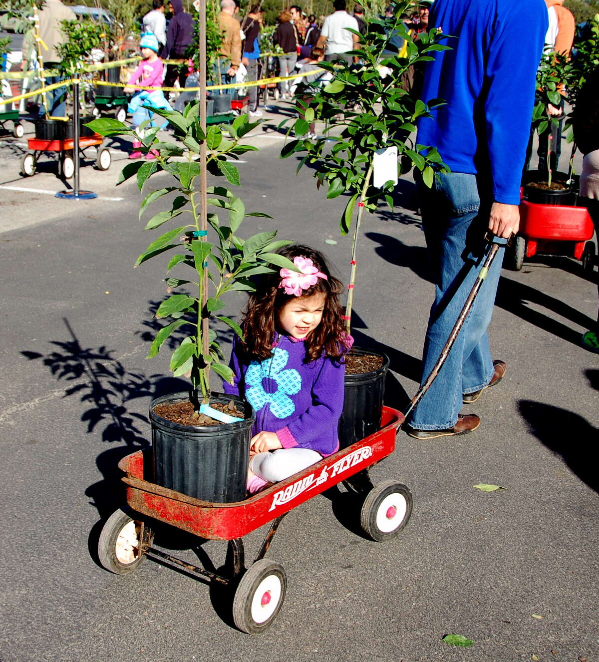 Avoid waiting in line. You can pick up your fruit trees at the Saturday, April 12, Urban Harvest Farmers Market at Eastside Street Fruit Tree Sale.