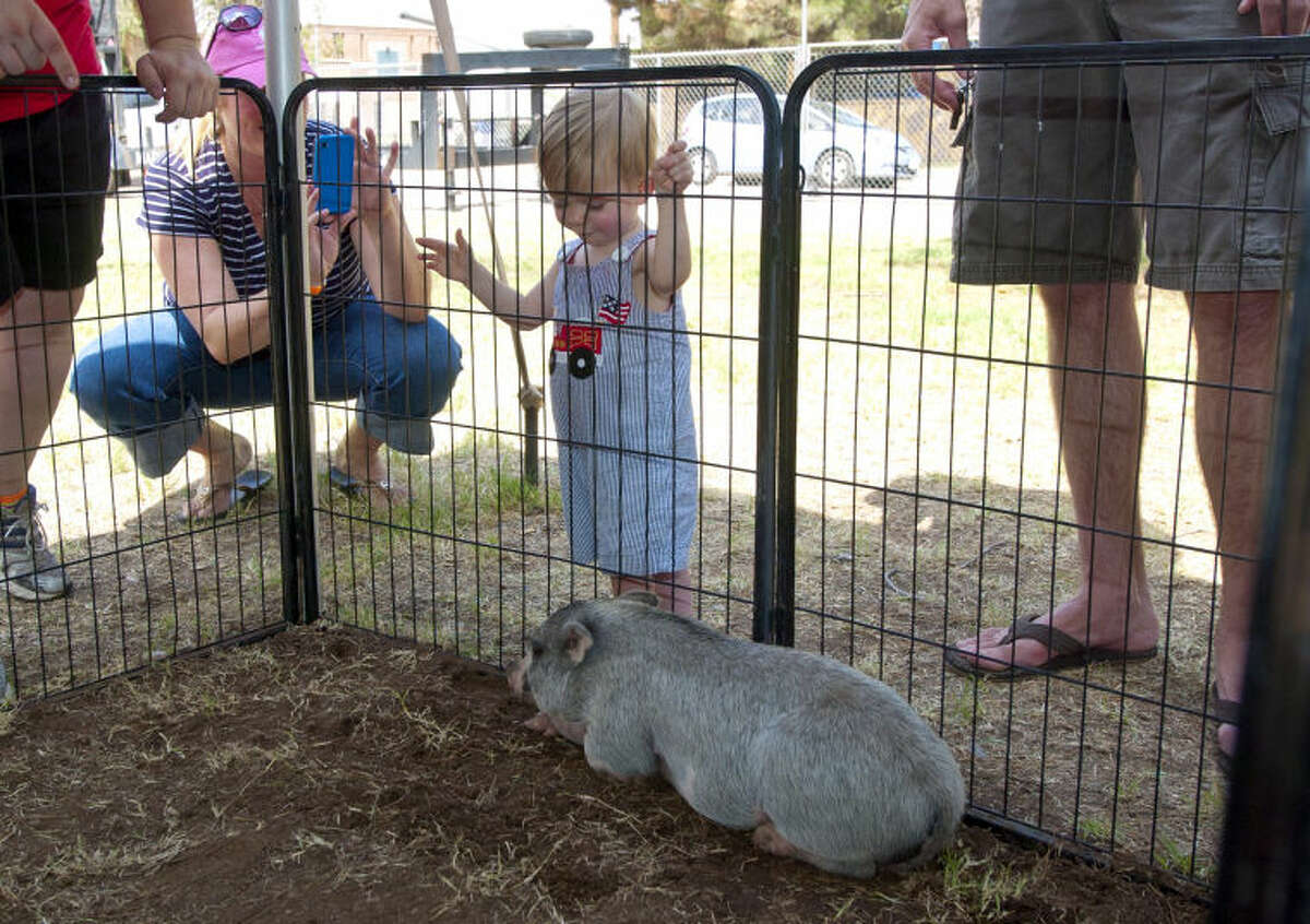 Blaine Leonard, age 1, checks out a pig at Septemberfest at Museum of the Southwest on Saturday. James Durbin/Reporter-Telegram