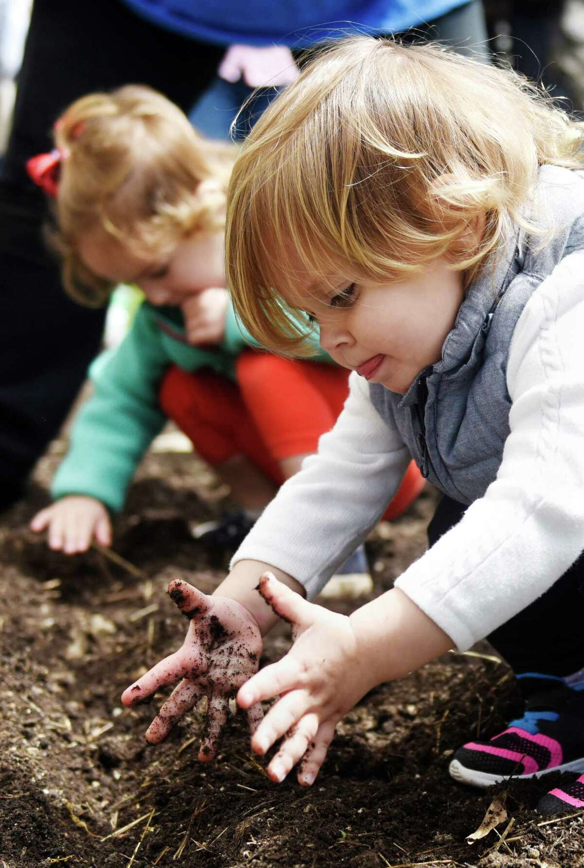 Nora Gutman, 2, gets her hands dirty while planting seeds in the school garden outside Putnam Indian Field School in Greenwich on Tuesday. The kids celebrated their school's designation as a Connecticut Green Leaf School by doing some morning planting in the garden beds on PIFS' annual planting day.
