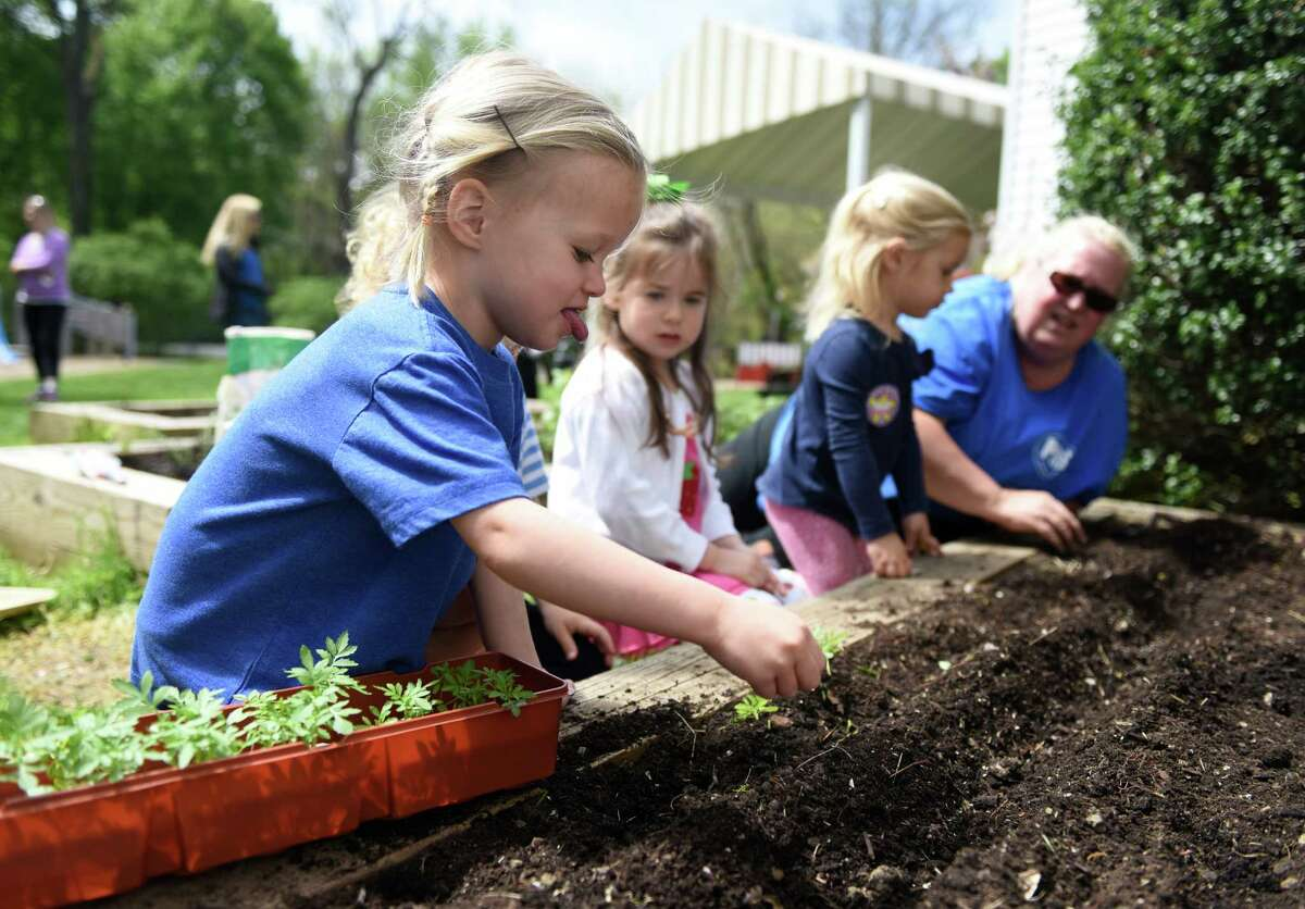 Mabel Gilmer, 3, plants seeds in the school garden outside Putnam Indian Field School in Greenwich, Conn. Tuesday, May 10, 2016. Putnam Indian Field School students celebrated their school's designation as a Connecticut Green Leaf School by doing some morning planting in the garden beds on PIFS's annual planting day.