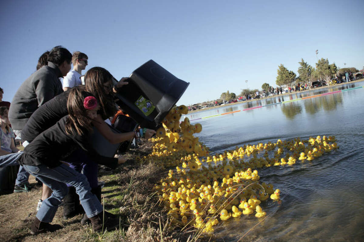 Lee High School orchestra students and booster club members deposit 3,600 ducks into the pond at CJ Kelly Park Saturday as part of the 10th annual Great Duck Race.