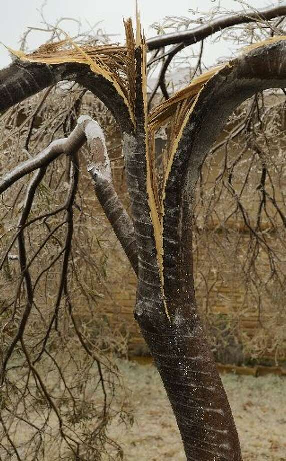 Tree limbs litter the ground around Midland following freezing rain weighing down limbs and breaking the off. Photo: Tim Fischer/Reporter-Telegram