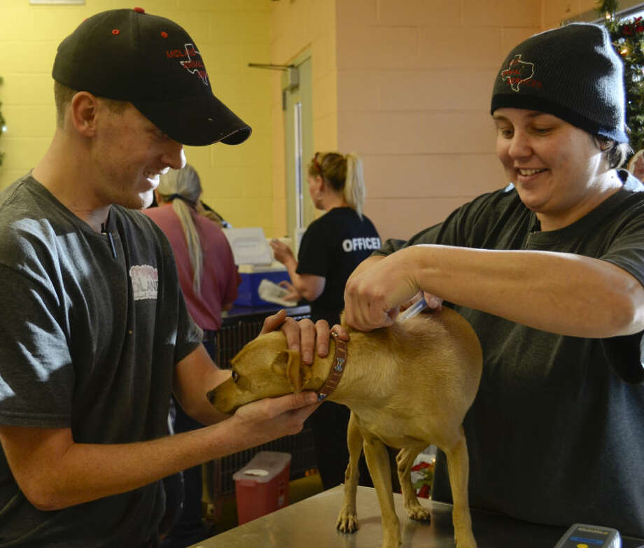 Robert Bone tries to hold a dog as Nicole Adkins gives it a vaccine shot Tuesday during Midland Animal Control's shot clinic. Tim Fischer\Reporter-Telegram Photo: Tim Fischer