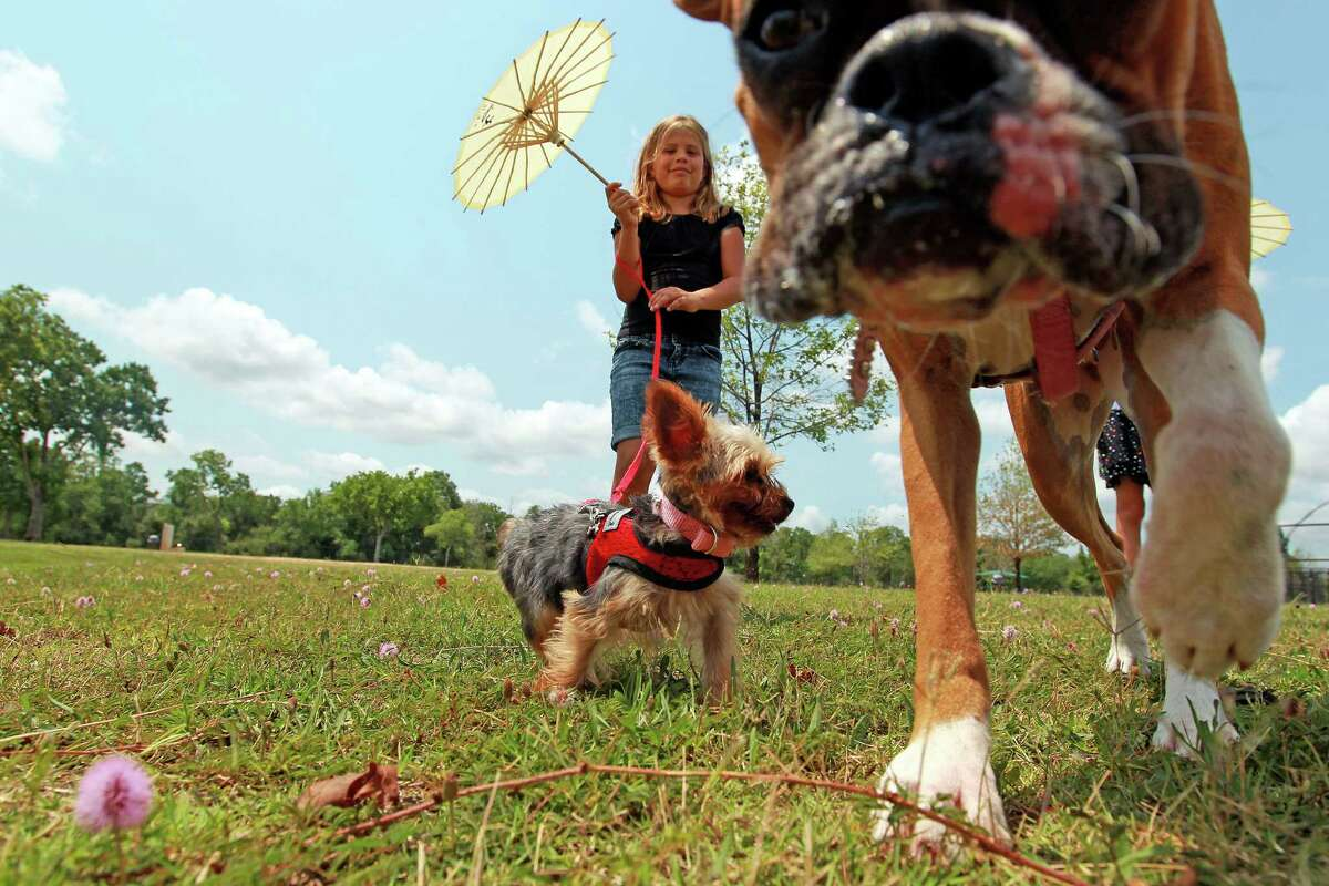 Camila Alvares of Katy, walks her dogs, Cloe, a Yorkshire Terrier, and Maya, a boxer, at Millie Bush Dog Park in George Bush Park.