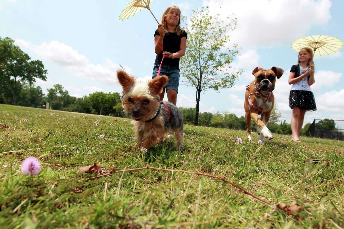 Camila Alvares, left, of Katy, walks her dogs, Cloe, a Yorkshire Terrier, and Maya, a boxer, with her friend Juliana Wilson, in Millie Bush Dog Park in George Bush Park.