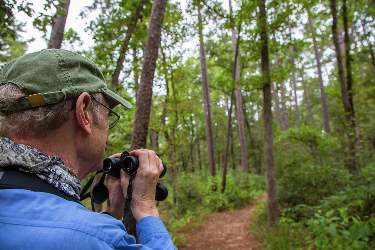 Huntsville State Park offers a lake and woodland trails for birding, hiking, camping, fishing, picnicking, and canoeing.