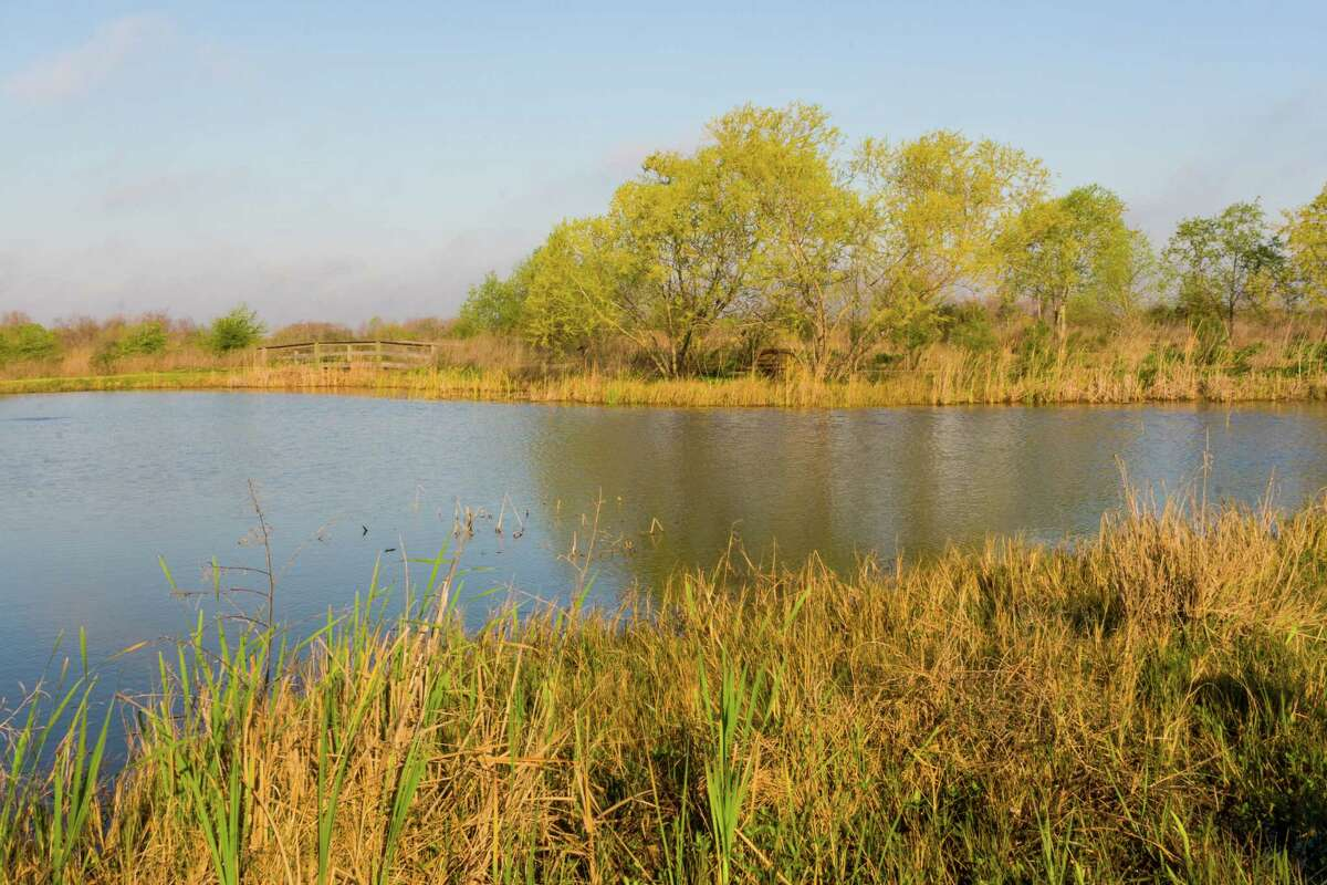 The Anahuac National Wildlife Refuge on East Bay provides freshwater ponds, marshes, and grasslands for legions of birds. Photo Credit: Kathy Adams Clark. Restricted use.
