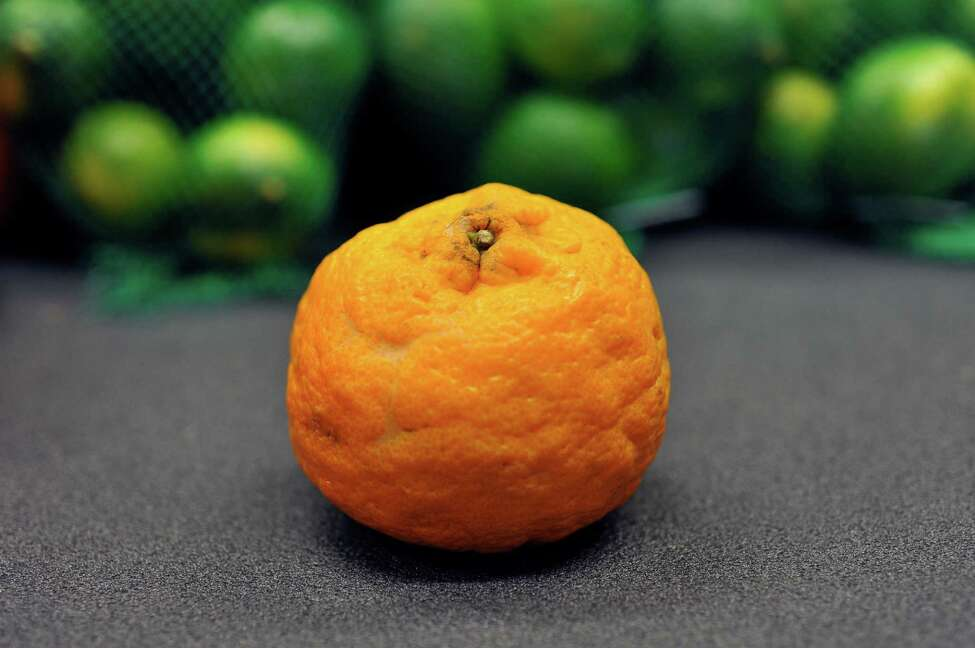 A view of a of Mandarin orange that is scarred and oversized at the Hannaford on Central Ave., on Tuesday, May 12, 2016, in Albany, N.Y. (Paul Buckowski / Times Union)