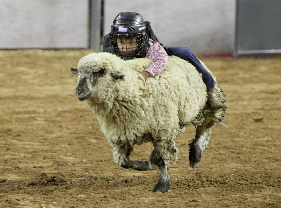 Young Mutton Bustin rider performs at the Houston Rodeo Monday, March 7, 2016, in Houston. ( Steve Gonzales  / Houston Chronicle  ) Photo: Steve Gonzales Steve Gonzales / © 2016 Houston Chronicle