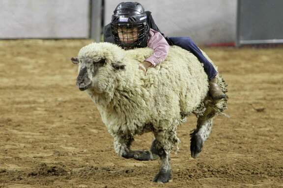 Young Mutton Bustin rider performs at the Houston Rodeo Monday, March 7, 2016, in Houston. ( Steve Gonzales  / Houston Chronicle  )