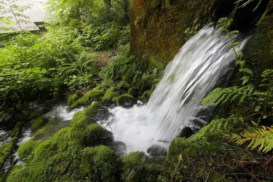 Water pours out of a hillside in Cascade Locks, Ore. Nestle's plan to build a water bottling plant has divided the town. Photo: Don Ryan, Associated Press