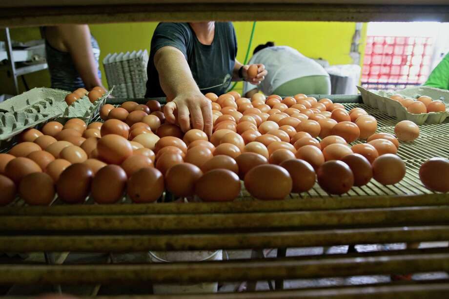 U.S. egg prices have tumbled 75 percent from a record in August, after the biggest bird-flu outbreak ever forced farmers to destroy flocks. Photo: Daniel Acker /Bloomberg News / © 2015 Bloomberg Finance LP