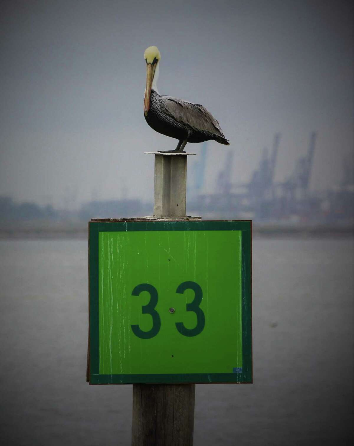 A seagull guards a marker heading out of Seabrook Marina to Galveston Bay