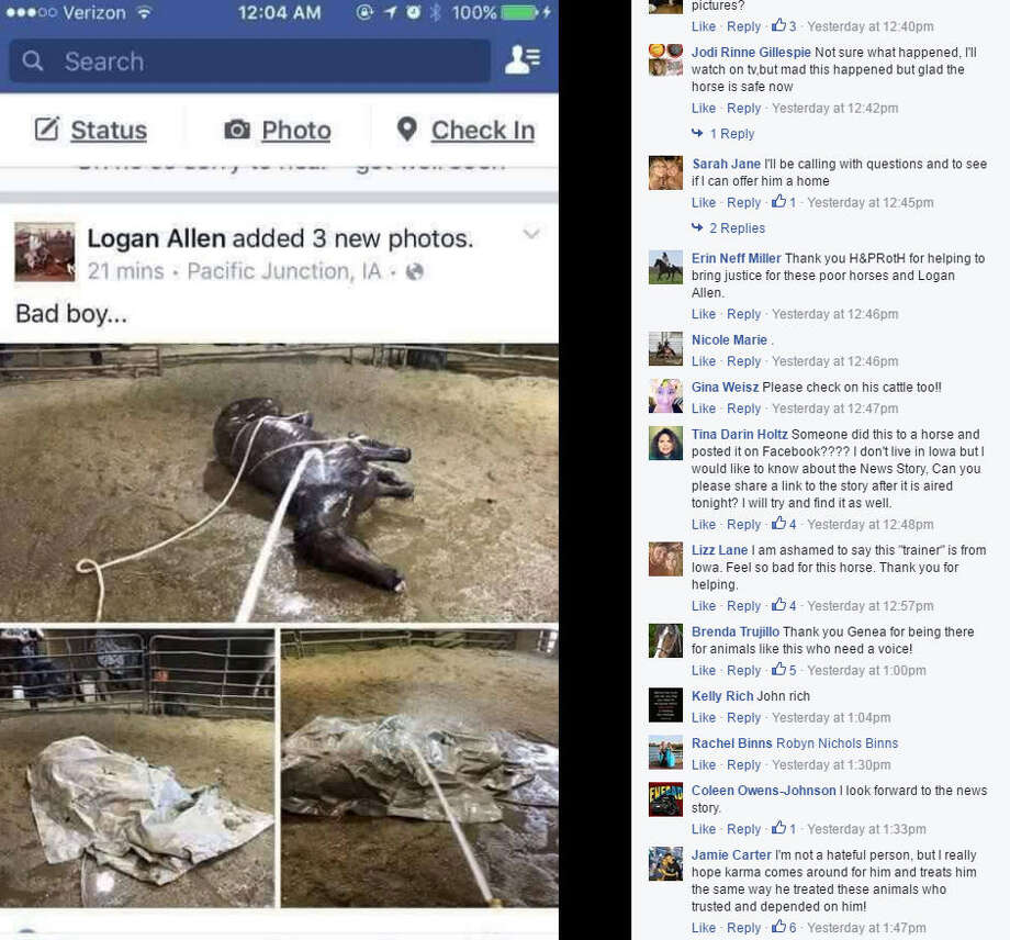 A Facebook photo showed a horse lying on the ground with its legs tied and tucked under its torso while water from a hose was being sprayed on it. Photo: Hooves And Paws Rescue/Facebook