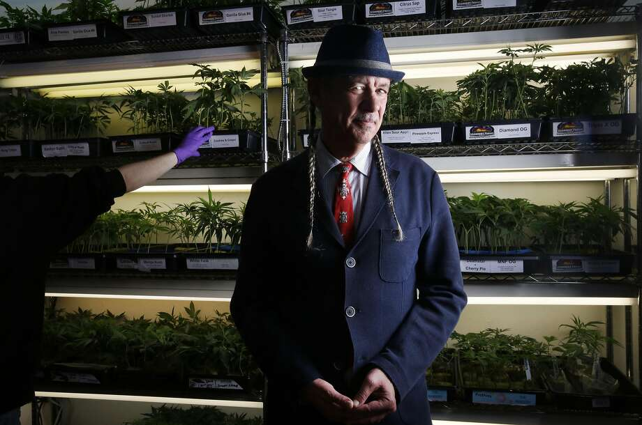 Steve DeAngelo owns Oakland's Harborside Health Center medical cannabis dispensary. Photo: Leah Millis, The Chronicle