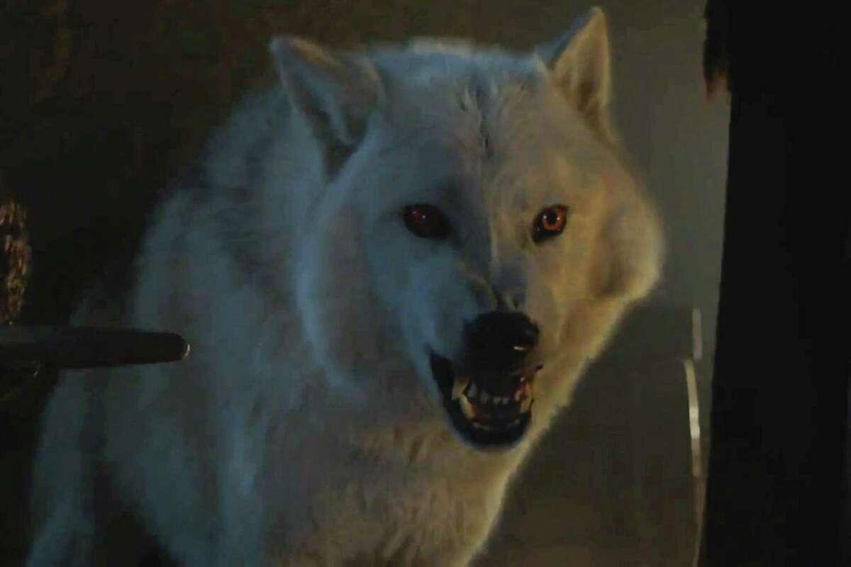 Ghost, Jon Snow's direwolf on