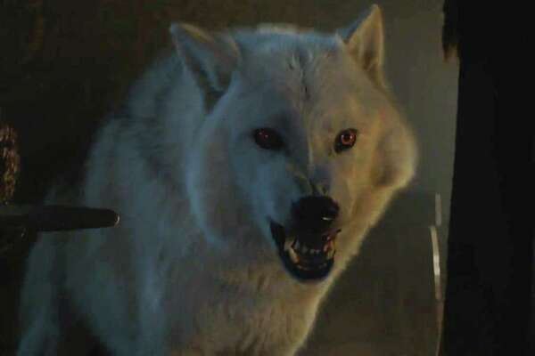 Ghost, Game of Thrones | Photo Credits: HBO