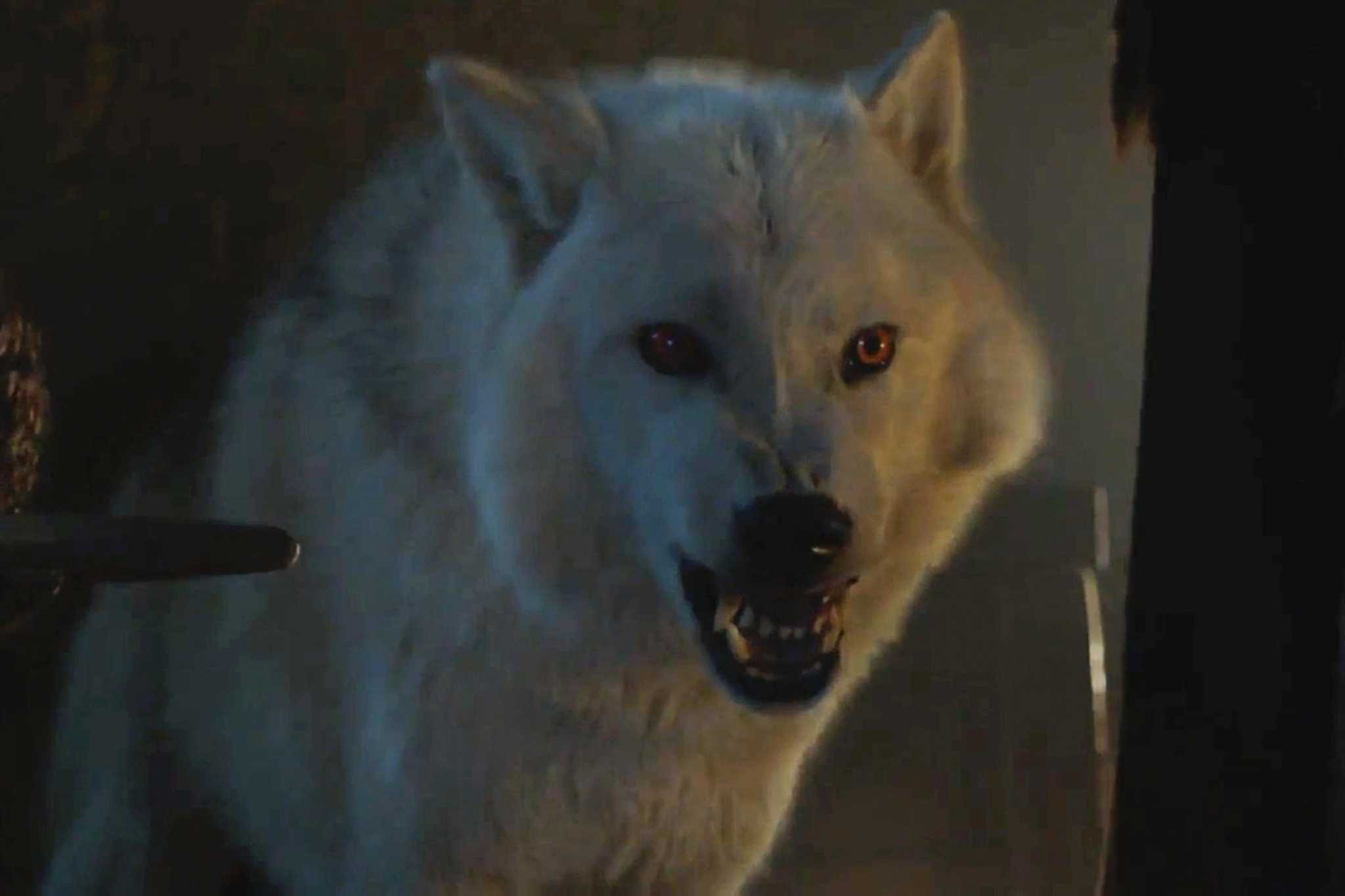 3 Reasons Ghost Is the Most Underrated Character on Game of Thrones - seattlepi.com