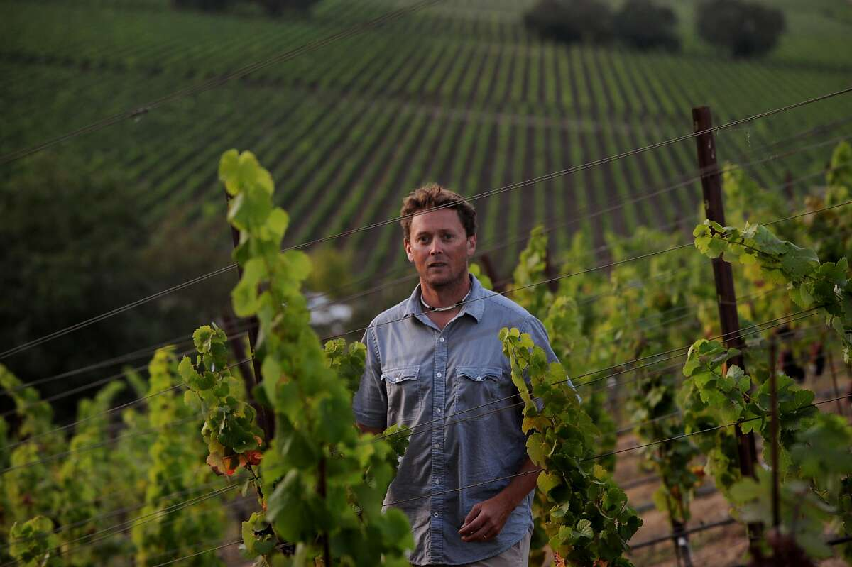 Winemaker Wells Guthrie in his vineyard of Trousseau grapes at Copain Winery in Healdsburg. September 3, 2011.