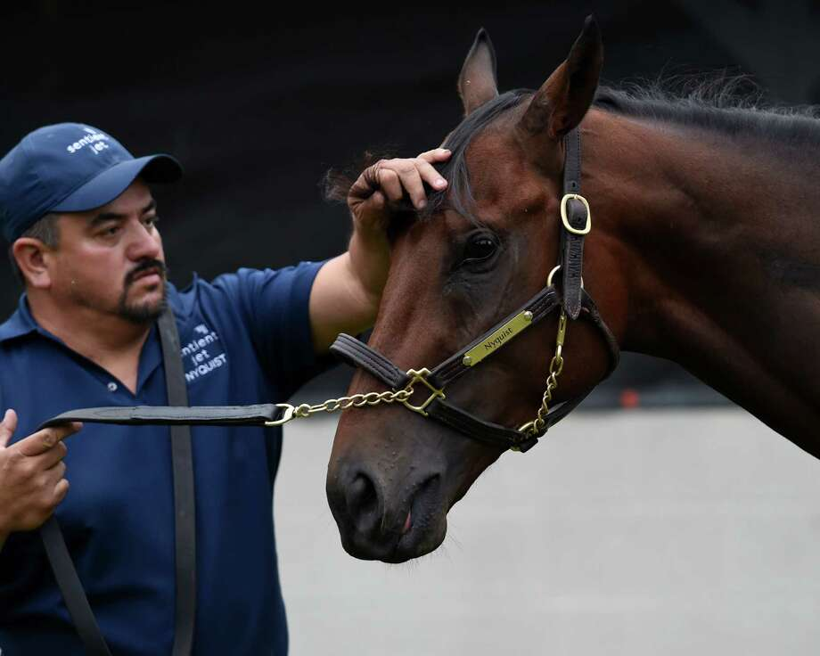 Nyquist gets a little primping from groom Elias Anaya before meeting the public in the barn area the day after winning the 142nd running of the Kentucky Derby May 8, 2016 at Churchill Downs in Louisville, K.Y.  (Skip Dickstein/Times Union) Photo: SKIP DICKSTEIN
