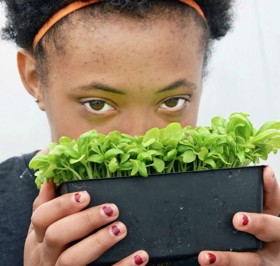 St. Anne Institute student Jyeara breathes in the aroma of Emily Basil in the school's greenhouse Thursday May 5, 2016 in Albany, NY.  (John Carl D'Annibale / Times Union) Photo: John Carl D'Annibale / 20036495A