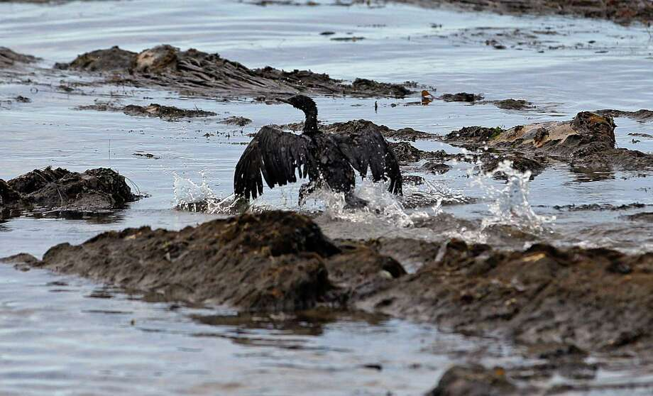 FILE - In this May 21, 2015, file photo, an oil-covered bird flaps its wings amid at Refugio State Beach, north of Goleta, Calif. Plains All American Pipeline said in a statement Tuesday, May 17, 2016, that a California grand jury has indicted the company and one of its employees in connection with the pipeline break. (AP Photo/Jae C. Hong, File) Photo: Jae C. Hong, STF / Copyright 2016 The Associated Press. All rights reserved. This material may not be published, broadcast, rewritten or redistribu