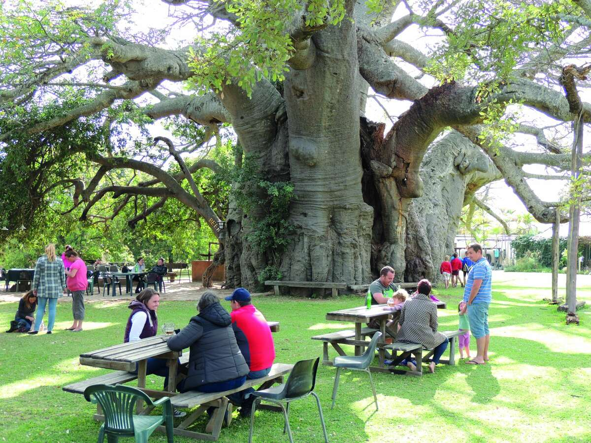 Bars: Baobab Tree Bar: Where: Limpopo, South Africa This incredible bar is housed in a Boabab tree, which is known as the widest tree in the world. Bar-goers can also enjoy the nearby nature reserves and national parks.