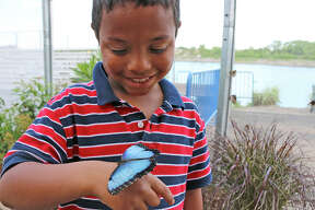 "Tropical butterflies fly freely this summer in the ""Flutter Zone"" at the Maritime Aquarium at Norwalk, to the delight of the exhibit's visitors of all ages."