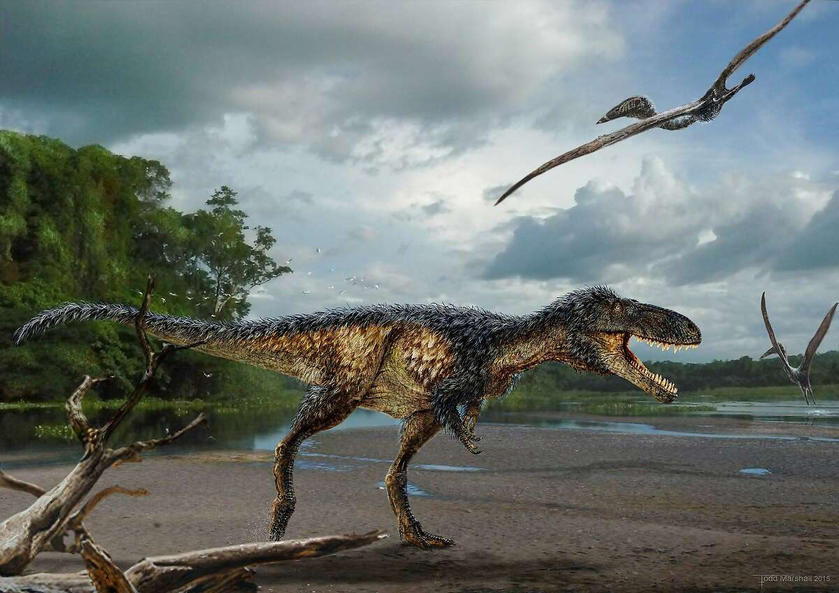 Life reconstruction of the new tyrannosaur Timurlengia euotica in its environment 90 million years ago. It is accompanied by two flying reptiles (Azhdarcho longicollis). The fossilized remains of a new horse-sized dinosaur, Timurlengia euotica, reveal how Tyrannosaurus rex and its close relatives became top predators, according to a new study published in the Proceedings of the National Academy of Sciences.